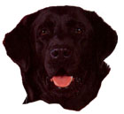 Here is a picture of 